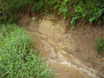 Ein schnell fließender Bach fließt von links nach rechts vorne. Rechts steigt das braune, erdige Ufer kahl und steil an. Von der Kuppe hängen Grünpflanzen herunter. Links verdeckt grünes Buschwerk das gegenseitige Bachufer.