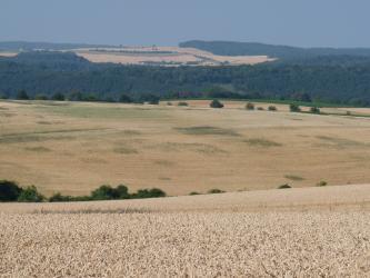 Hinter der Kuppe eines Getreidefeldes zeigt sich eine weite, ebenfalls bewirtschaftete Ebene. Den Hintergrund durchzieht ein breites Waldgebiet, ehe sich am Horizont weitere Getreidefelder öffnen.