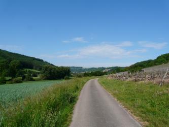 Das Bild zeigt verschiedene Arten der Landnutzung. Links ist ein Getreidefeld zu sehen, während sich rechts neben einem Fahrweg Rebstöcke zeigen. Dahinter finden sich jeweils ansteigende, bewaldete Hänge.