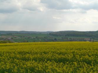 Hinter einem weiten, gelbgrünen Rapsfeld erhebt sich eine Grünlandschaft, durchsetzt mit Äckern, Bäumen und Gehöften. Ein flacher, bewaldeter Höhenzug rechts und weitere flache Höhen im Hintergrund sind ebenfalls erkennbar.