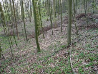 Das Bild zeigt einen nach links abfallenden, mit losem Laub und Ästen bedeckten Waldhang. Schlanke, ebenfalls nach links geneigte Bäume sind darauf verteilt.
