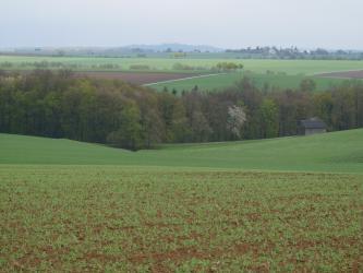 Unterhalb eines begrünten Ackers und einer angrenzenden Grünfläche zieht sich ein Waldstreifen von links nach rechts. Dahinter folgen weitere, auf- und absteigende Grünland- und Ackerflächen. Etwas erhöht liegt rechts noch eine Ortschaft.