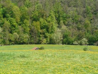 Hinter einer abgestuften, bis zur Bildmitte reichenden Grünlandfläche verläuft in leichtem Bogen ein Fluss. Den Hintergrund füllen dicht stehende Bäume aus.