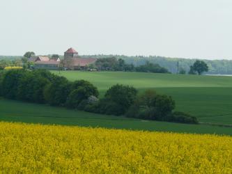 Der Blick geht über ein gelbes Rapsfeld auf eine Grünfläche, die erst abfällt, zum Horizont hin wieder ansteigt. An der tiefsten Stelle verläuft ein Baumstreifen. Auf der Kuppe der Ebene stehen ebenfalls Bäume sowie links Gebäude und ein gemauerter Turm.