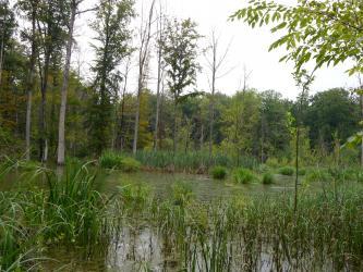 Das Bild zeigt eine mit Schilf und hohen, teilweise abgestorbenen Bäumen bestandene Wasserfläche.