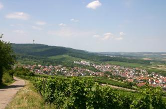 Blick über einen zur Mitte und nach rechts unten hin abgestuften Weinberg, an dessen Fuß sich eine Siedlung ausbreitet. Rechts schließt sich ein flach gewelltes Mosaik aus Grünland und Äckern an, nach links erhebt sich ein bewaldeter Berg.