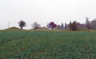 Hinter einem bepflanzten Acker erheben sich vier kegelförmige, mit Gras bewachsene Erdhügel. Davor stehen kleinere Laubbäume.