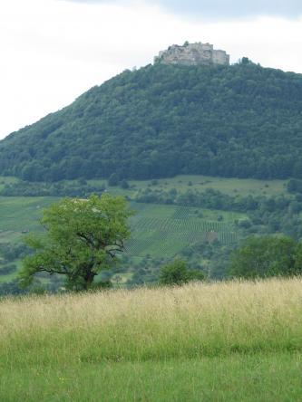 Oberhalb einer hoch gewachsenen Wiese und wenigen Bäumen blickt man auf einen bewaldeten, steil nach rechts ansteigenden Berg, auf dessen Kuppe eine Burgruine thront. Am Hang unterhalb des Waldes, im Mittelgrund, liegen terrassierte Rebflächen.