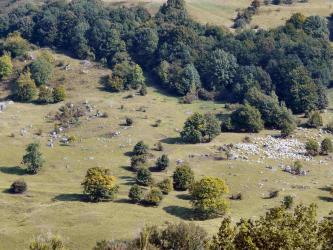Die aus großer Höhe gemachte Aufnahme zeigt in der rechten Hälfte eine Schafherde, die eine Heidelandschaft mit Hecken, Bäumen und kleineren verstreuten Felsen abweidet.