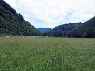 Das Bild zeigt eine weite, hochgewachsene Wiese. Im Hintergrund sind mehrere unterschiedlich hohe, nach links und rechts ansteigende bewaldete Hänge gestaffelt.