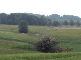 Das Bild zeigt eine mit Gras und Blumen bewachsene, feucht wirkende Grünfläche. In einer Vertiefung nahe dem Vordergrund sowie weiter hinten wachsen Bäume. Im Hintergrund steht Wald.
