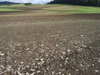 Das Bild zeigt mehrere Ackerstreifen mit - im Vordergrund - deutlichem Steinanteil. Im Hintergrund schließt sich eine flache Senke an, in der neben Ackerflächen auch Grünland erkennbar ist.