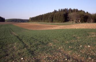 Das Bild zeigt einen begrünten Acker, der in leichtem Abwärtsbogen nach links hinten verläuft. Daran grenzt rechts ein brauner Ackerstreifen mit deutlichem Steingehalt an der Oberfläche. Hinten und noch weiter rechts schließt sich Wald an.