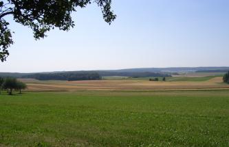 Blick über eine grün und braun gefärbte, flachwellige Nutzlandschaft, die bis zum bewaldeten Horizont reicht.
