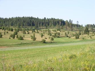 Unter einer bewaldeten Hügelkuppe breiten sich unterschiedlich verlaufende, braungrüne und grüne Heideflächen aus, durchsetzt mit Bäumen und Büschen. Im Vordergrund ist das Gelände flacher, ehe es zum Betrachter hin wieder ansteigt.