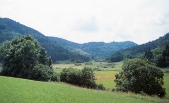 Über einer nach rechts abfallenden Wiese und mehreren Bäumen geht der Blick auf ein ebenes Tal mit Feuchtwiesen. Nach rechts und links ansteigende Waldhänge umschließen das Tal.