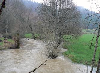 Das Bild zeigt einen reichlich Wasser führenden Bach, der seine angrenzenden Ufer teilweise überschwemmt hat. Auch mehrere Bäume stehen in den bräunlich grauen Fluten.