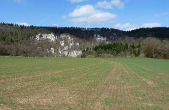 Hinter einer weiten, mit frischem Grün bewachsenen Ackerfläche und einer Baumgruppe rechts erheben sich steile, bewaldete Hänge. Links und mittig durchbrechen mächtige, grauweiße Felstürme den Wald.