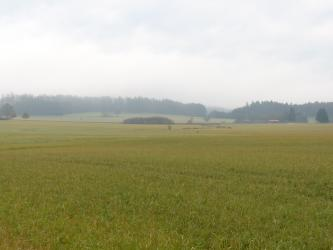 Das Bild zeigt eine weite grüne Wiese unter regnerischem Himmel.