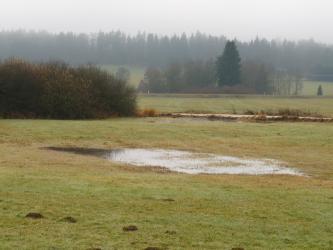 Das Bild zeigt eine große Wasserlache auf einer Wiese. Dahinter sind weitere Wiesen, Baumgruppen sowie ein Waldhorizont zu sehen.