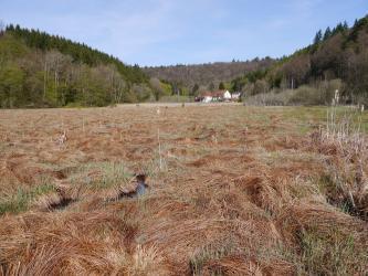 Das Bild zeigt eine weite Fläche inselartig zusammengesetzte braune und grüne Grasbüschel, zwischen denen Wasser hervortritt. Im Hintergrund sind einzelne Häuser sowie links und rechts ansteigende bewaldete Hänge erkennbar.