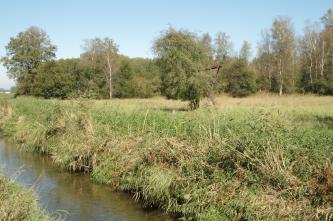 Ein kleiner Bach zieht sich von der Bildmitte vorne nach links hinten. Danaben befinden sich hohe Wiesen mit vereinzelten Bäumen.