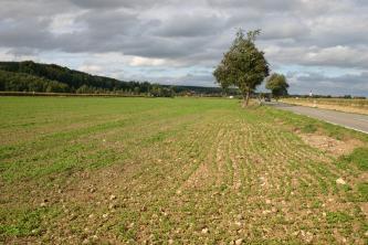 Im Vordergrund befindet sich ein Feld, welches leicht begrünt ist. Am rechten Bildrand verläuft eine Straße, an dieser stehen zwei Bäume. Links im Hintergrund erhebt sich ein bewaldeter Hügel.