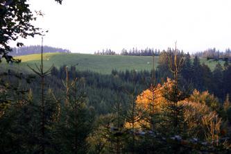 Blick über dichte Nadel- und Laubwälder auf einen hochliegenden, flachen grünen Hügel. Auf der Grünfläche weiden Rinder. Im Hintergrund sind weitere Waldspitzen erkennbar.