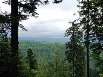 Zwischen hochstehenden Nadelbäumen geht der Blick auf weite, bis zum Hintergrund reichende Waldflächen. Ferne bewaldete Bergrücken bilden den Abschluss.