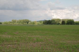Das Bild zeigt flache, in Wolkenschatten liegende begrünte Äcker. Im Hintergrund zeigen sich verschiedene Gruppen von Laubbäumen.