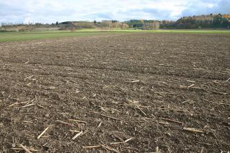 Blick auf eine graubraune Ackerfläche mit Resten abgeernteter Maispflanzen. Im Hintergrund sind links die flachen Hänge eines Steinbruches und rechts Waldflächen zu erkennen.