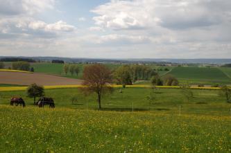 Blick von einer mit gelben Blumen bedeckten Wiese auf grünes Hügelland mit einzelnen Bäumen und Äckern. Im Vordergrund links weiden Pferde. Im fernen Hintergrund zeigen sich bewaldete Höhen.