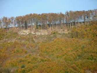 Blick auf einen bewaldeten Steilhang. Unterhalb der Kuppe zeigen sich wenige Gesteinsflächen.