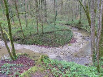 Von leicht erhöhtem Standort aus blickt man auf die in lichtem Wald liegende Kurve eines Baches.