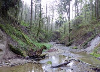 Blick auf eine bewaldete Schlucht mit Gewässer und links und rechts aufsteigenden Hängen.