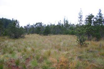 Blick auf ein dicht bewachsenes, grün-braunes Hochmoor. Der Hintergrund wird durch Nadelbäume begrenzt.