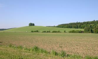 Hinter ausgedehnten Äckern erhebt sich ein länglicher, leicht gerundeter und flacher grüner Hügel mit kleiner Baumkrone. Auf der Oberfläche des Hügels sind die Spuren eines landwirtschaftlichen Fahrzeugs erkennbar. Rechts im Hintergrund steht Wald an.