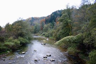 Blick auf einen von Wald und Gebüsch eingefassten Fluss.