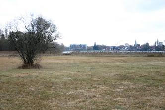 Blick auf braungrüne, abgemähte Wiesen mit einem Baum. Im Hintergrund ein Streifen Schilf, Gewässer und eine Stadt.