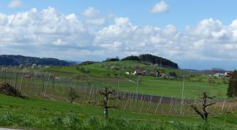 Blick auf eine hügelige Wiesenlandschaft mit vereinzelten Äckern. Die Kuppen der Hügel sind bewaldet. Im Vordergrund stehen Gerüststangen, die dem Hopfenanbau dienen.