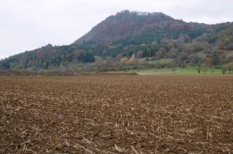 Hinter einem stoppeligen Acker befindet sich ein herbstlich verfärbter bewaldeter Vulkankegel.