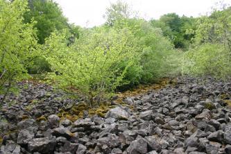 Im Vordergrund dieses Bildes ist eine Schutthalde, bewachsen mit hellgrünen Büschen.