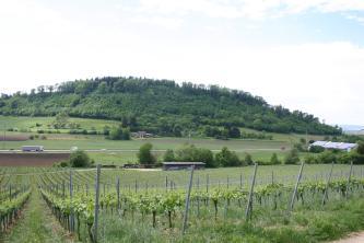 Im Vordergrund sind Reben zu sehen. Dahinter befindet sich eine Straße und ein langestreckter, bewaldeter Hügel.