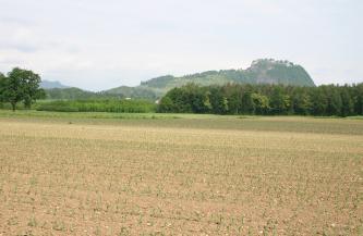 Im Vordergrund ist ein schotterhaltiger, hellbrauner Acker zu sehen, im Hintergrund befindet sich hinter einer Baumgruppe ein bewaldeter Hügel.