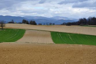 Blick auf mehrere, teilweise konvex gewölbte, flachhügelige Ackerstreifen. Der Acker im Vordergrund ist mittelbraun und steinig. Die Äcker dahinter sind heller, im Mittelgrund zudem links und rechts von Grün begrenzt. In der Ferne liegen bläuliche Berge.