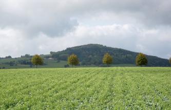 Im Hintergrund, in der Bildmitte, erhebt sich ein bewaldeter, pyramidenförmiger Berg. Davor, im  Mittelgrund, stehen einzelne Bäume. Im Vordergrund breitet sich ein bepflanzter Acker aus.