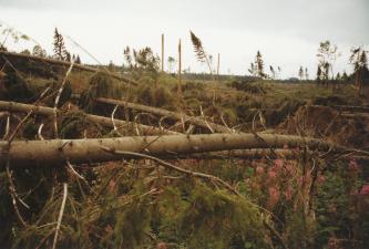 Blick auf kreuz und quer übereinanderliegende, umgestürzte Baumstämme und abgeknickte Äste an einem Hang. Im Hintergrund stehen noch einzelne Bäume.