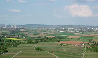 Von erhöhtem Standort aus blickt man über eine flachwellige Landschaft mit Rebflächen im Vordergrund, Wiesen, Äckern und Bäumen. Im Hintergrund größere Siedlungen sowie bewaldete, flache Berge.
