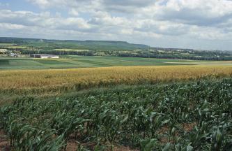 Blick über unterschiedlich bestellte Ackerflächen mit Grün- und Getreidepflanzen auf eine zum Hintergrund hin ansteigende Hügellandschaft mit Waldstreifen und Siedlungen.