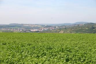 Zwischen hochstehendem Pflanzenwuchs und einem blassen Himmel zieht sich eine hügelige, rechts terrassierte Lanschaft mit Feldern, Waldstücken, Rebflächen sowie einer größeren Siedlung. Im Hintergrund links ist zudem ein Steinbruch erkennbar.